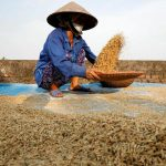 China no longer top buyer of Vietnamese agriculture produce – VnExpress International