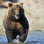 Chinitna Bay Bear Tours